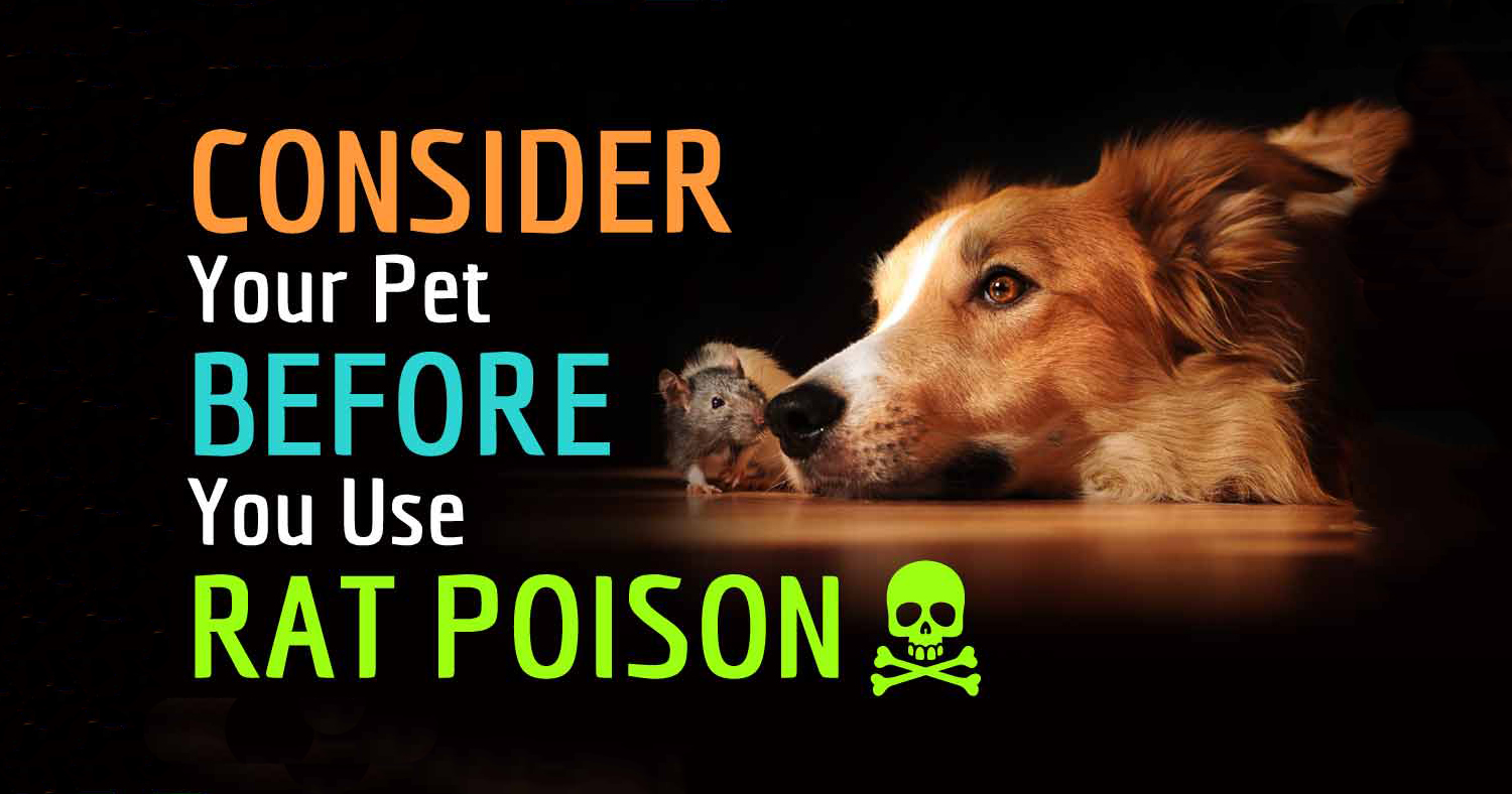 Poisoning Of Dogs And Cats With Rodenticides Animaland