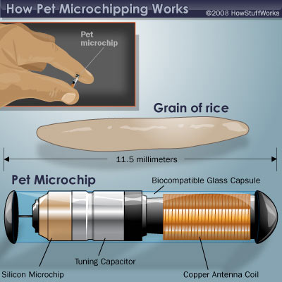 microchip-companies-south-africa-pet-health-care-3
